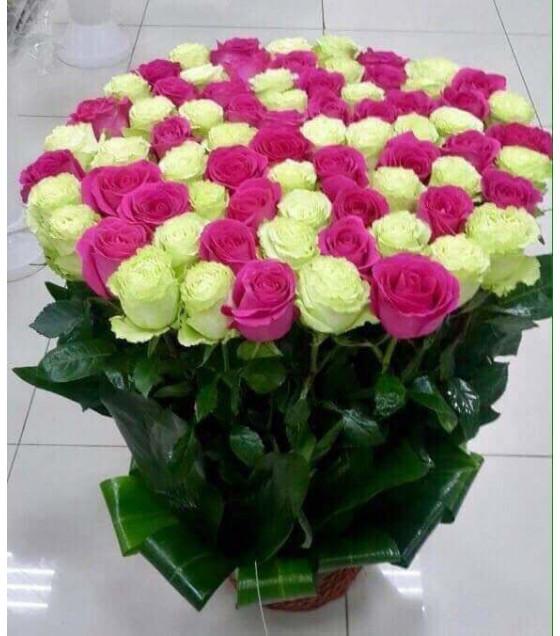51   վարդերի զամյուղ
